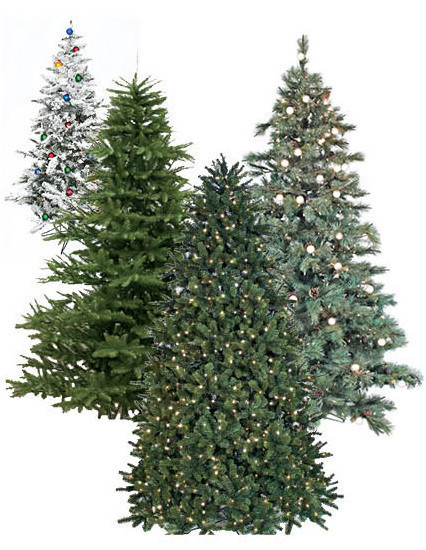 so you can buy from milaegers with confidence that youre getting the best tree at the best price and that it will satisfy you for many many years