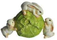 Rabbits on Lettuce
