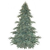 Blue Spruce 7.5' Pre Lit Clear Lights Thumbnail