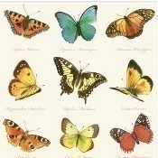 Collection of Butterflies Napkins - Cream Thumbnail