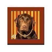 Chocolate Lab Pillow Thumbnail