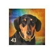 Black Dachshund Pillow Thumbnail