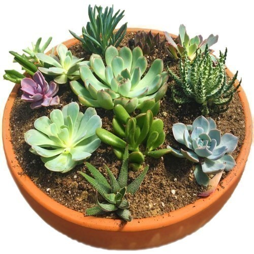 A20 Succulent Sensations Workshop May 2nd Thumbnail