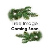 Cordless Evergreen Pine in Urn 3' Pre Lit LED Thumbnail