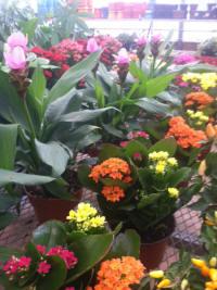 Milaeger's Inc  Event - Indoor Greenhouse