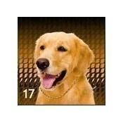 Golden Retriever Pillow Thumbnail