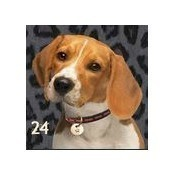 Beagle Pillow Thumbnail