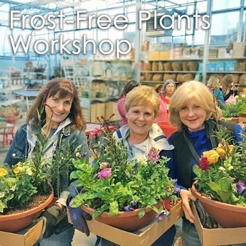 A11 Frost-free Plants Workshop April 8th Thumbnail